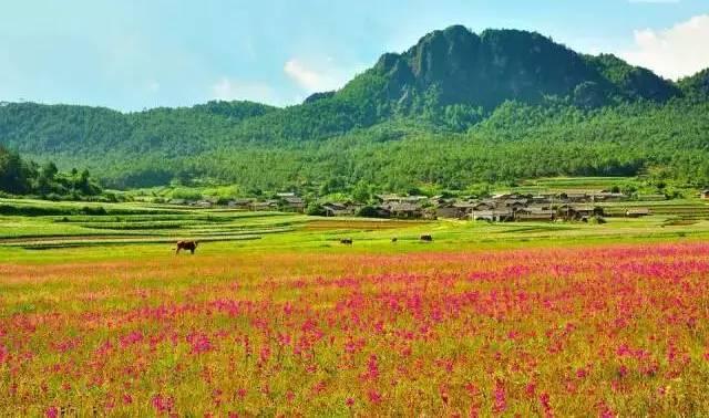 丽江人私藏的六大免费景点,你都知道吗?